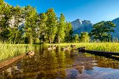 Meadow with flooded boardwalk in Yosemite National Park Valley. California, USA. poster