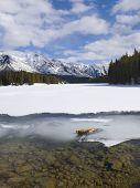 Johnson Lake Frozen Over