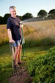 Mature man irrigating vegetable garden with a garden hosepipe.