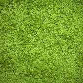 Green Carpet
