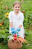 Vegetable garden - little gardener with harvests of healthy vegetables
