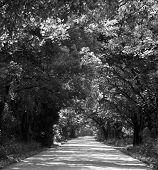 Dallas Road