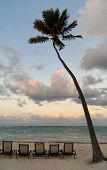 Deckchairs Under Palmtree On The Beach At Sunset