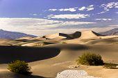 Mesquite Dunes Sandscape