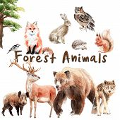 Watercolor Set Of Forest Animals: Watercolor Set Of Forest Animals: Bear, Wolf, Fox, Hare, Owl, Boar poster