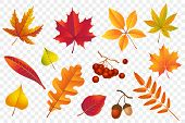 Autumn Falling Leaves Isolated On Transparent Background. Yellow Foliage Collection. Rowan, Oak, Map poster