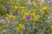 Wild Wildflowers Close-up. Wild Flowers In A Meadow Nature. Natural Summer Background With Wild Flow poster
