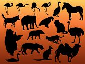 Animals Silhouette poster