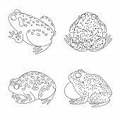 Bitmap Illustration Of Amphibian And Animal Logo. Collection Of Amphibian And Nature Stock Bitmap Il poster
