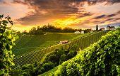 South Styria Vineyards Landscape In Sulz Austria. View At Vineyard Fields In Sunset Sun In Summer. T poster
