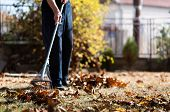 Man Collecting Fallen Autumn Leaves In The Backyard poster