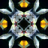 Seamless Symmetrical Pattern Abstract Fishes In The Ocean Texture poster