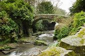 Jesmond Dene Stone Bridge