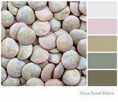 A background of green lentils. Colour palette with complimentary colour swatches
