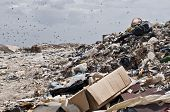stock photo of yucky  - Landfill with Flying birds over the landfill - JPG