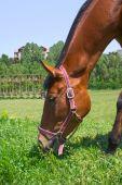 ein Pferd isst eine Gras