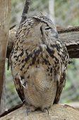 Night Owl Predator