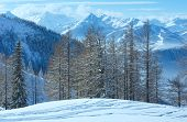 Winter Grove Near Dachstein Mountain Massif