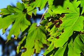 Rusty Green Leaf Closeup