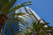 Downtown LA Los Angeles skyline California with palm trees