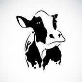 pic of cow head  - Vector image of an cow on white background - JPG