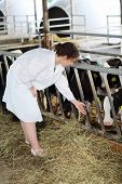 Happy woman in white coat reaches out to small calves at large farm.