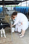Mother and son feed little cute calf in stall in big cow farm.