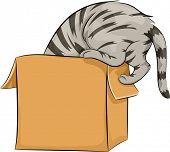 Illustration of a Cat Curiously Peeking Inside a Box