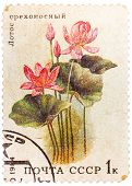 Post Stamp Printed In Ussr (cccp, Soviet Union) Shows Image Of Lotus From Aquatic Plants