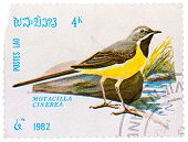 Stamp Printed In Laos Shows Grey Wagtail (motacilla Cinerea)