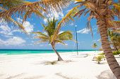 tropical beach with multiple palm trees and a boat in Tulum Mexico the Caribbean