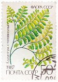 Stamp Printed In The Ussr Shows Maidenhair
