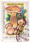 Stamp Printed In Ussr, Tylopilus Felleus, Formerly Boletus Felleus Mushroom In Wild