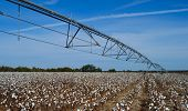Irrigation Pivot In Cotton Field