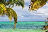 pic of glider  - Hang glider in the sky above caribbean sea - JPG