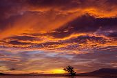Dramatic fiery orange sunset in Siquijor in the Philippines with a mangrove tree silhouetted against