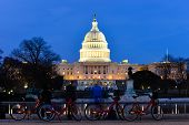 image of night-blooming  - Washington DC  - JPG