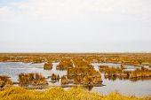 stock photo of marshes  - Marsh in natural park of rio Aveiro Portugal - JPG