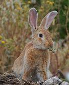 Mr BIG ears