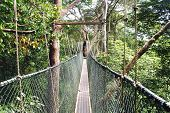 stock photo of canopy  - Canopy walk in Taman Negara National Park Malaysia.