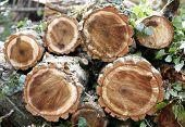 Chopped wooden logs