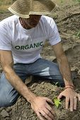 growth concept: organic farmer planting