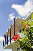 Flor de Hibiscus rojo