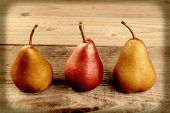 High angle closeup shot of a group of three pears on a table cloth. Bosc and Red Pears are shown, in