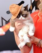 LOS ANGELES - APR 13:  Grumpy Cat arrives to the 2014 MTV Movie Awards  on April 13, 2014 in Los Ang