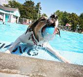 a cute dog having fun at a local public pool