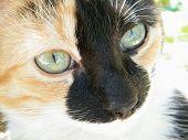 Cara de gatinho
