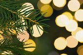 Fir tree branch with green needles on blurred lights background