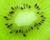 Close Up On Kiwi Fruit