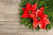 stock photo of poinsettia  - christmas tree branch with red poinsettia flower on wooden background - JPG